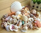 100g Beach Mixed charm Craft Sea Shells Aquarium For Jewelry Necklace Making
