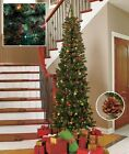 7 ' Slim Pre-Lit Christmas Tree W / 200 Lights 10 Pine Cones-Multi-Color or White