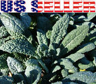 200+ ORGANICALLY GROWN Lacinato Dinosaur Kale Nero di Toscana Heirloom NON-GMO