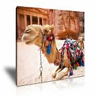 ANIMAL Camel Canvas Framed Printed Wall Art 1 ~ More size