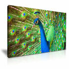 PEACOCK With Feathers Canvas Framed Print 4 ~ More Size