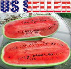 15+ ORGANICALLY GROWN GIANT Congo Watermelon Seeds Heirloom NON-GMO Sugar 35 LB