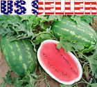 15+ ORGANICALLY GROWN GIANT All Sweet Watermelon Seeds Heirloom NON-GMO 25-30 LB