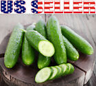 30+ ORGANICALLY GROWN Tendergreen Burpless Cucumber Seeds Sweet Heirloom NON-