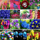 Various Exotic Hydrangea Orchid Ideal Garden Potted Seeds Rare Flower Plants