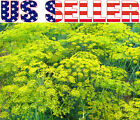 200+ ORGANICALLY GROWN Dill Bouquet Seeds Heirloom NON-GMO Aromatic Fragrant USA