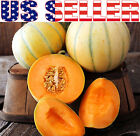 25+ ORGANICALLY GROWN French Charentais Melon Cantaloupe Seeds Heirloom NON-GMO