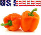 30+ ORGANICALLY GROWN GIANT Orange King Bell Pepper Seeds Heirloom NON-GMO Sweet