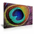 Peacock Feather Canvas Wall Art