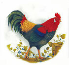 Ceramic Decals Colorful Country Rooster Vine Berries