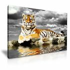 Tiger Canvas Wall Art Picture Print ~ 9 Sizes