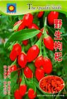 Rare Vegetable 4-season Garden Seeds Original Colorful retail package 原装特色蔬菜种子