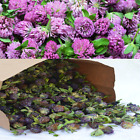 Organic Wild Harvest Red Clover Whole Dried Tops Herb Trifolium Pratense