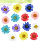 12pcs Pressed Flower Dried Daisy Flowers For DIY Art Crafts Resin Jewelry Making