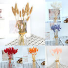 20pcs/bunch Bunny Tails Lagurus Ovatus Grass Dried Flower Home Wedding Decor Au