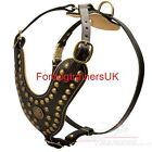 New  Royal Studded  Leather Dog Harness H11- Cane Corso
