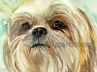 SHIH TZU Dog Art Print of Watercolor Painting Judith Stein Signed