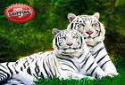 "Animal Big Cat Two White Tigers Poster Print Wall Art Picture Photo 14""x10"""