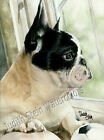 French Bulldog Frenchie Dog Art Print of Watercolor Painting Judith Stein