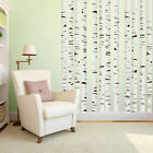 Birch Trees - Branches & Trees Mural Printed Wall Decals