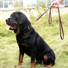Champion 2m/3m Heavy Chain Dog Lead with Leather Handle Long Leather Braided
