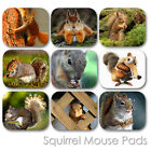SQUIRREL WILD FOREST HUNTING BEAUTIFUL ANIMAL CUSTOM MOUSE PAD MOUSEPAD  (SM-01)