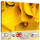 YELLOW FLOWERS FLORAL PETALS MODERN CANVAS WALL ART FRAMED PRINTS PICTURES PHOTO