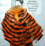 More images of Fly Tying Hareline Golden Pheasant Tippet cape - natural orange