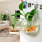 Wall Mounted Acrylic Fish Tank Hanging Bowl Bubble Aquarium Goldfish Plant US