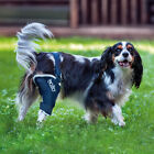 Balto Dog Knee Brace: Cruciate Ligament Arthritis Patella...