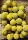 Used Tennis Balls For Dogs. Dog Ball / Toy - 15 25 50 - Lowest Price On Ebay !