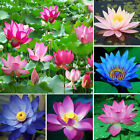 10Pcs Bonsai Lotus Water Lily Flower Bowl Pond Fresh Seeds Perfume Lotus Decor