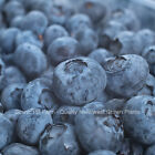 Blueberry Plants -10 Varieties - 9-16 Inch Tall Potted Plants - State Inspected