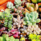 Rare Variety Mixed Flower Rainbow Colorful Beauty Home Garden Plant Seeds Decor