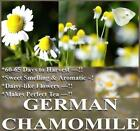 The Dirty Gardener German Chamomile