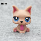 Littlest Pet Shop Rare Hasbro Big Eyes LPS Figure Cute Animals Toys Xmas Gift B