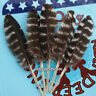 More images of Hot sale 10pcs beautiful 7-10cm Natural Pheasant feathers Decoration choice