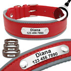 Soft Padded Leather Personalised Dog Collar with Engraved Name Plate Brown Red