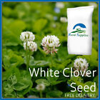 White Clover Green Manure Seeds - ORGANIC GARDEN MANURE VARIOUS QUANTITIES