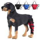 HN- Dog Canine Rear Leg Knee Brace Hock Joint Wrap for Prevents Injuries Sprains