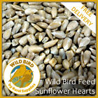 Sunflower Hearts Wild Bird Feed 5KG - NO MESS PREMIUM ALL YEAR ROUND SEED