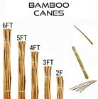Heavy Duty Bamboo Canes Strong Thick Plant Flower Durable Support Stick 2FT-6FT