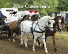 Zilco Black Team Classic Carriage Driving Horse Harness Std Collar Wipe Clean