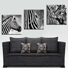 Zebras Modern Wall Art On Quality Canvas Set Of 3 FRAMED Choice Of Clock