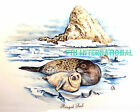 A45 ~ Ringed Seal & Baby Pup on Ceramic Decal 2 sizes to choose from Arctic Snow image
