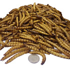 Giant Mealworms--Freeze Dried, Koi, Pond Fish, Large Fish,Turtles,Birds,Reptiles