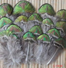 Wholesale 10-100PCS beautiful 2-20cm/2-8inches Pheasant Tai фото