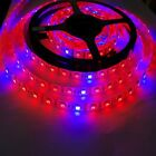Plant Growing Hydroponic LED Strip 5050 5M 300SMD Red Blue 3:1 5:1 8:1 Light 12V