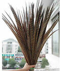 Wholesale 10-100 PCS LOT Natural Pheasant Tail Feathers 50 -55 cm / 20-22 inch