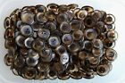 """Brown Tortoise Shell and Clear 21mm 34L 7/8"""" 2 Hole Coat Craft Buttons (W152)"""